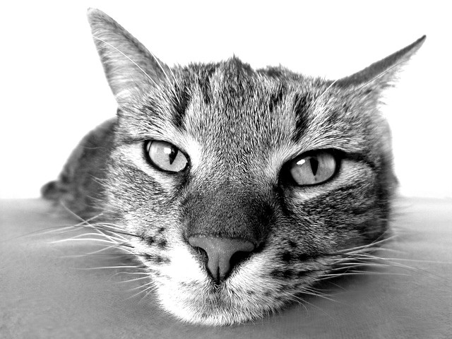 5 Reasons Your Cat Needs Daily Pet Sitting Visits