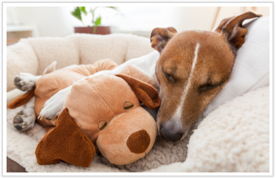 Common Signs That Your Pet Is In Pain