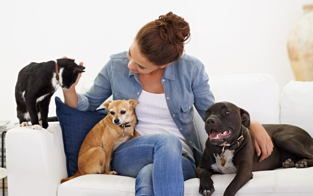 Why Hire A Professional Pet Sitter