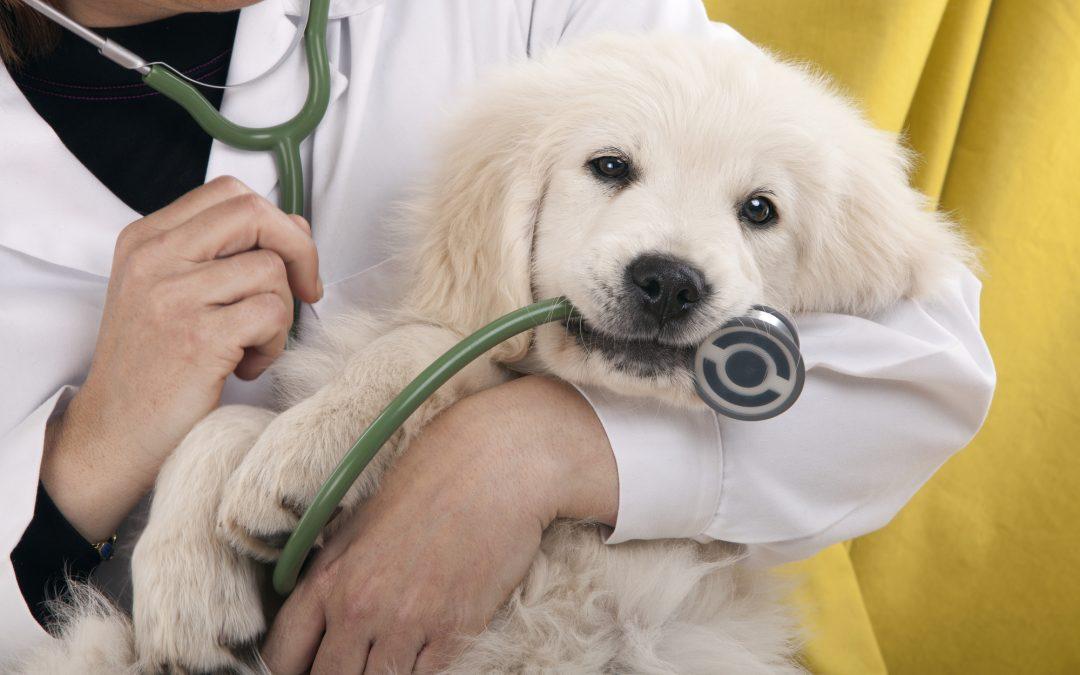 Veterinary Clinics in Peshtigo and Marinette, WI and Menominee MI
