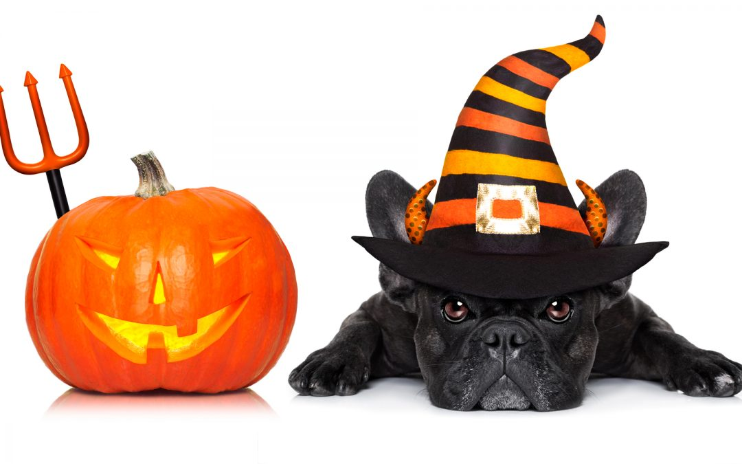 Best Halloween Costumes for Marinette and Menominee Pets in 2020