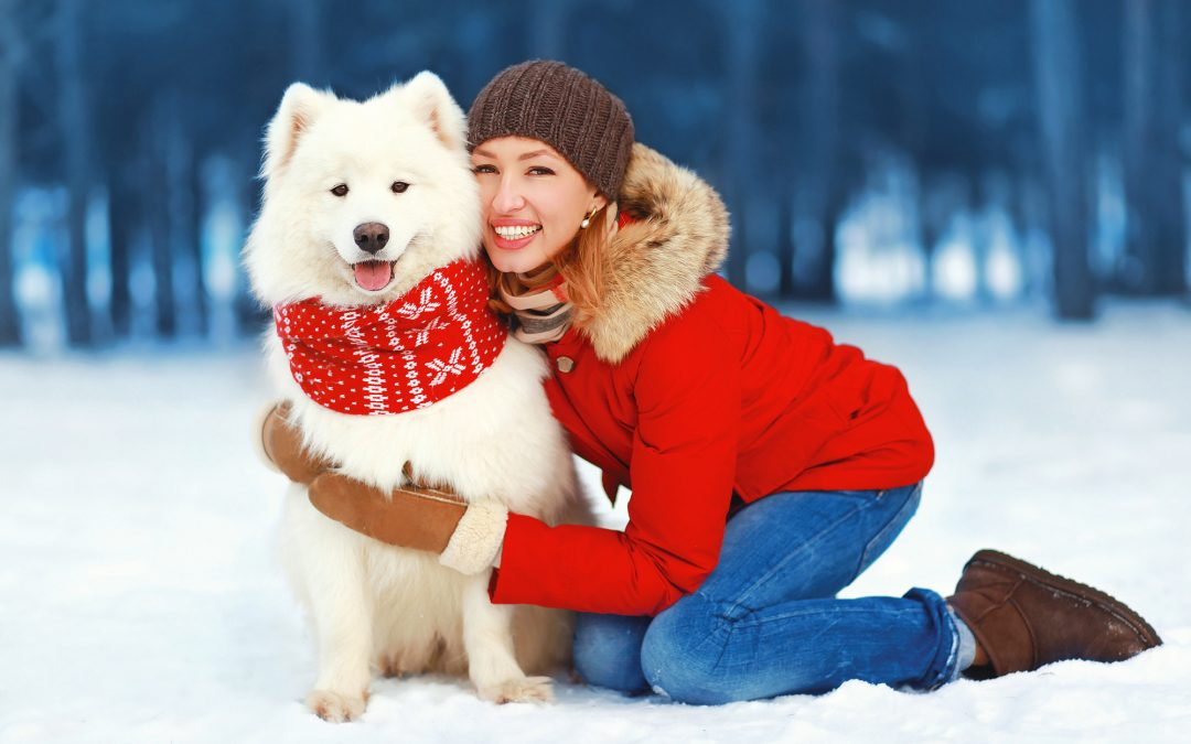 How To Choose An In-Home Pet Sitter In Marinette